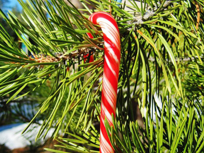 Holiday Tree Lightings in North Lake Tahoe