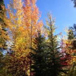 The colorful rainbow of pine and deciduous trees.