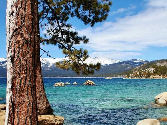 sand harbor pine (683x1024)